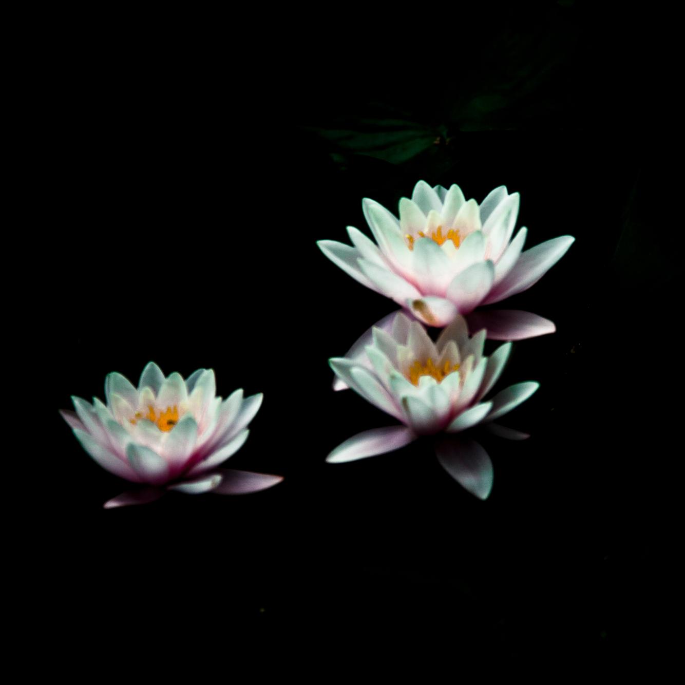 uk_flowers.jpg