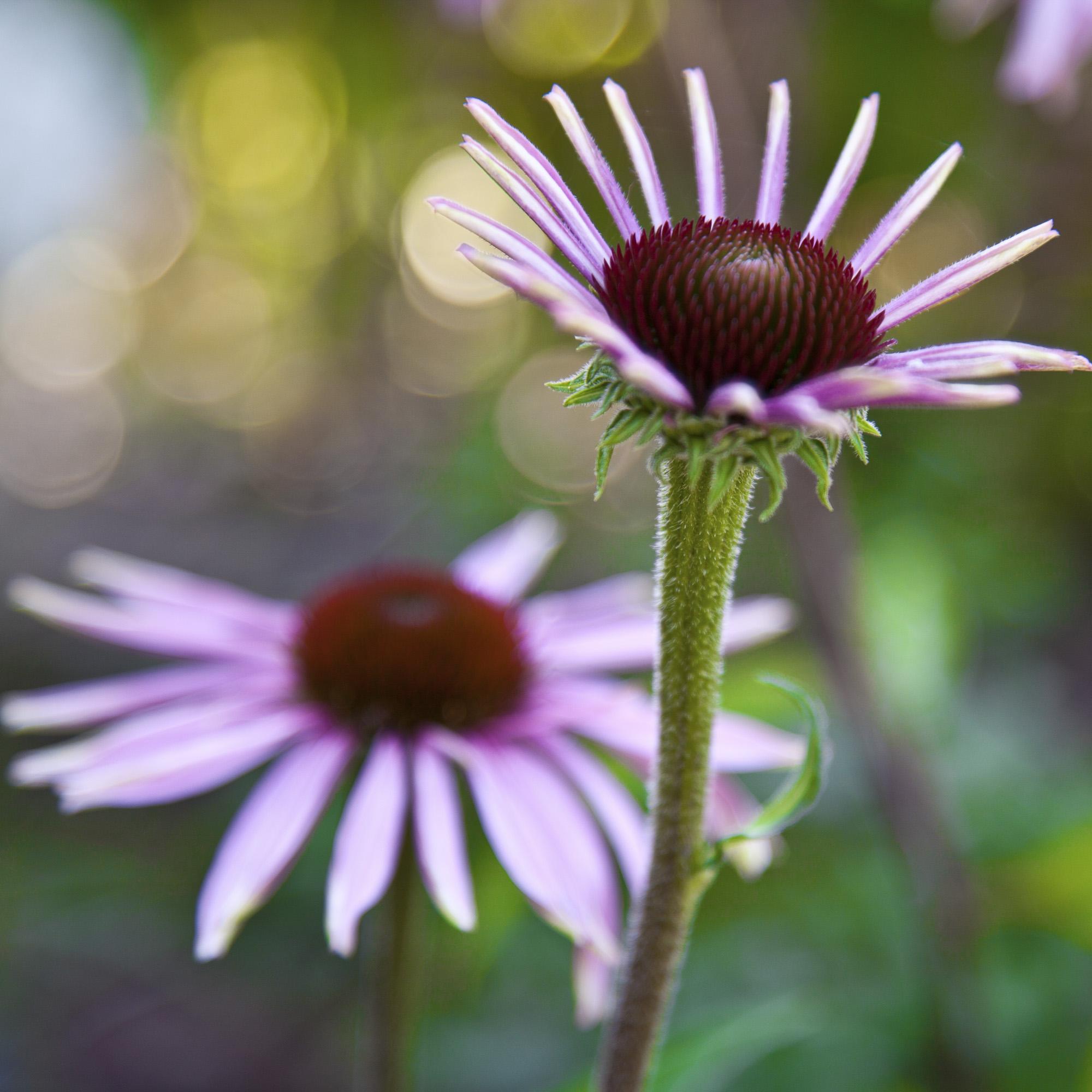 uk_flowers_pink.jpg