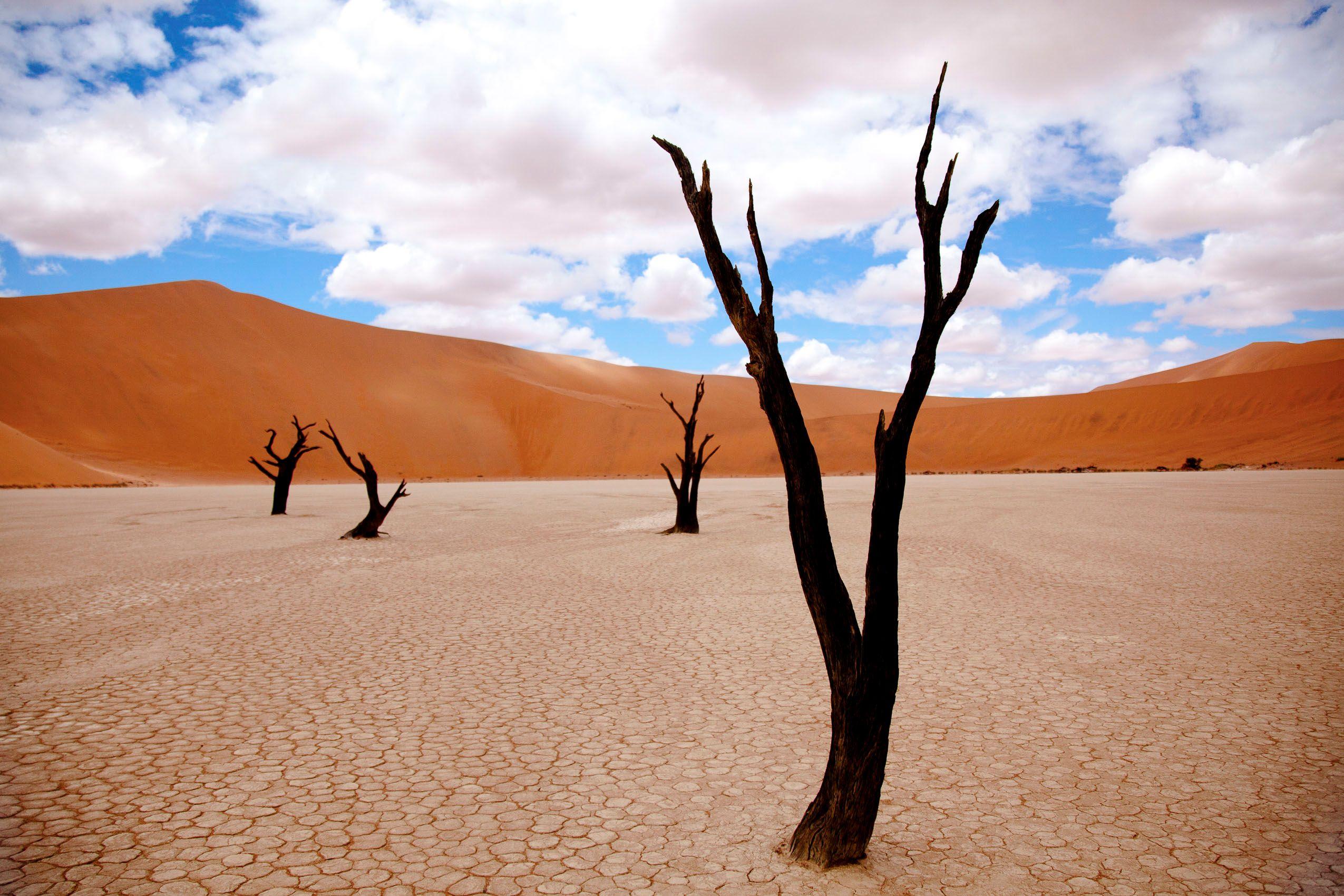 namibai_deadvlei_sossusvlei_trees.jpg