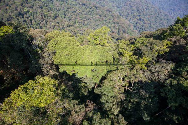 rwanda_nyungwe_forest_canopy_walk.jpg