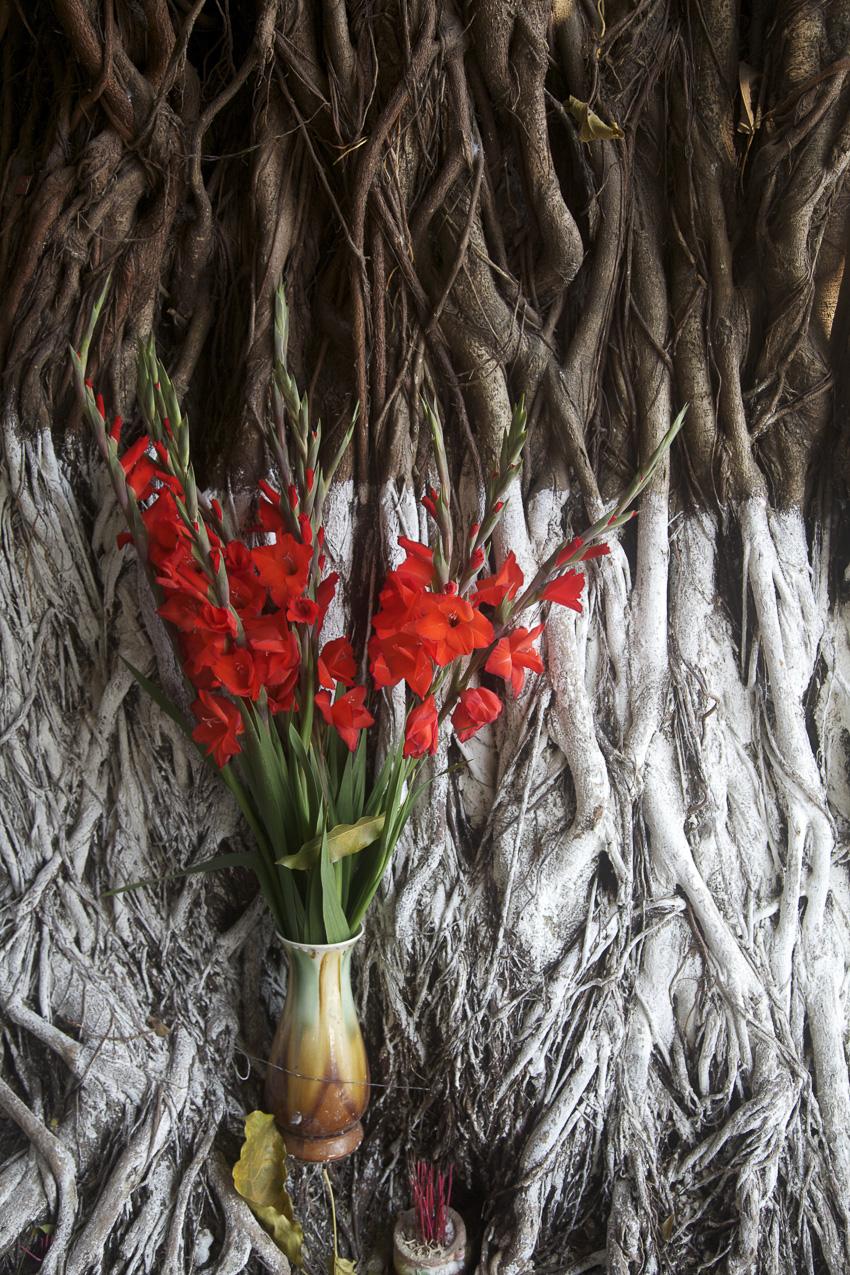 vietnam-hoian_ancester_worship_flowers_tree.jpg