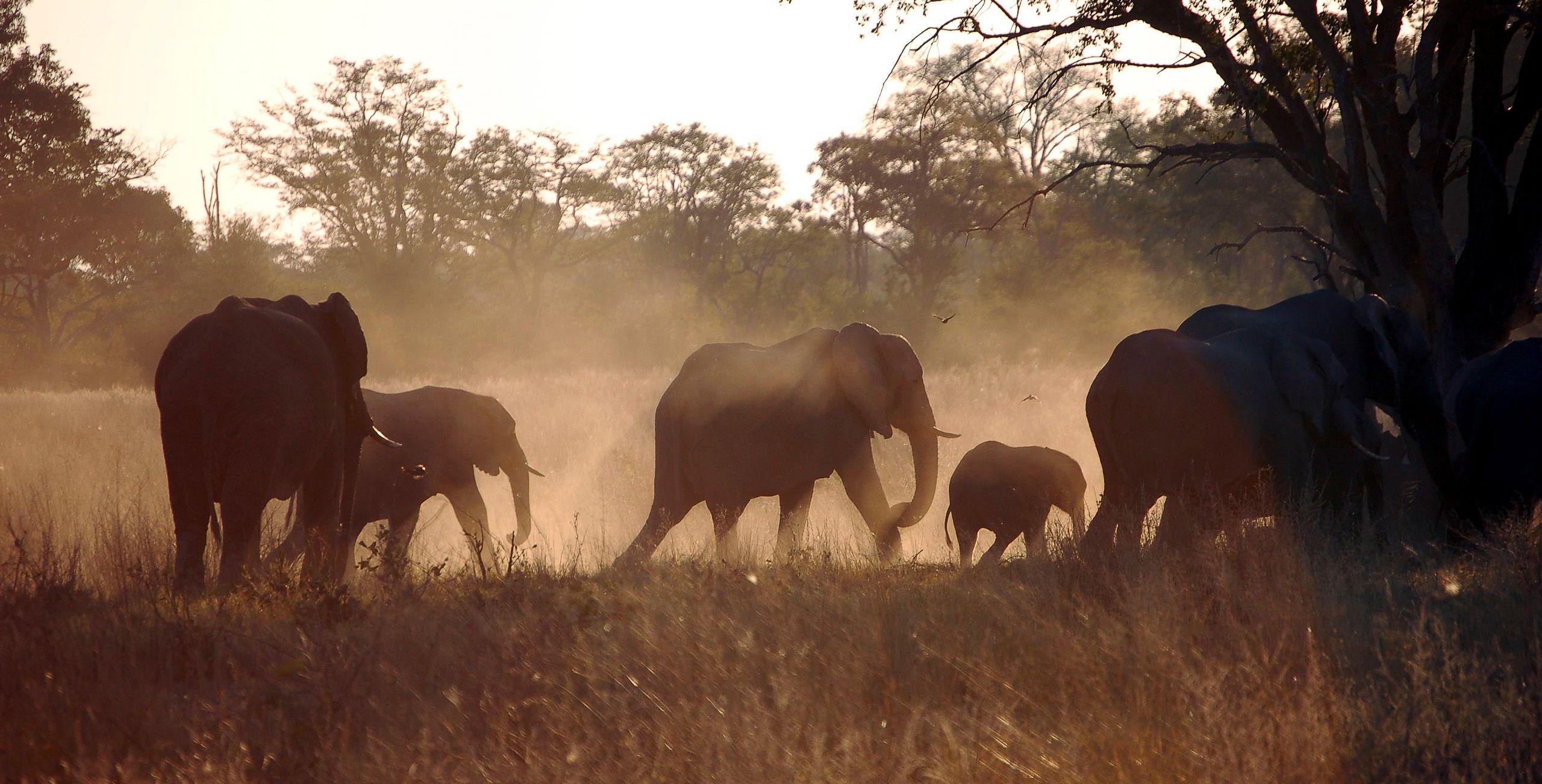 botswana_elephants_dusk_travelling.jpg