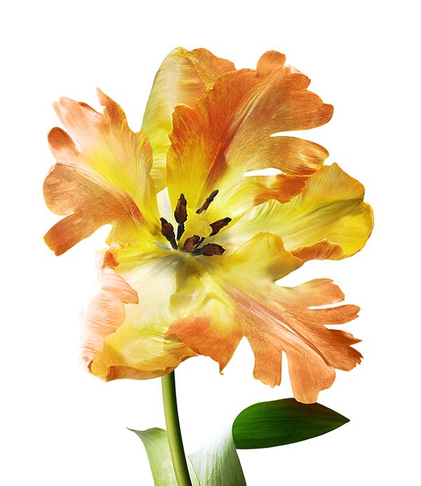 flower_002.jpg