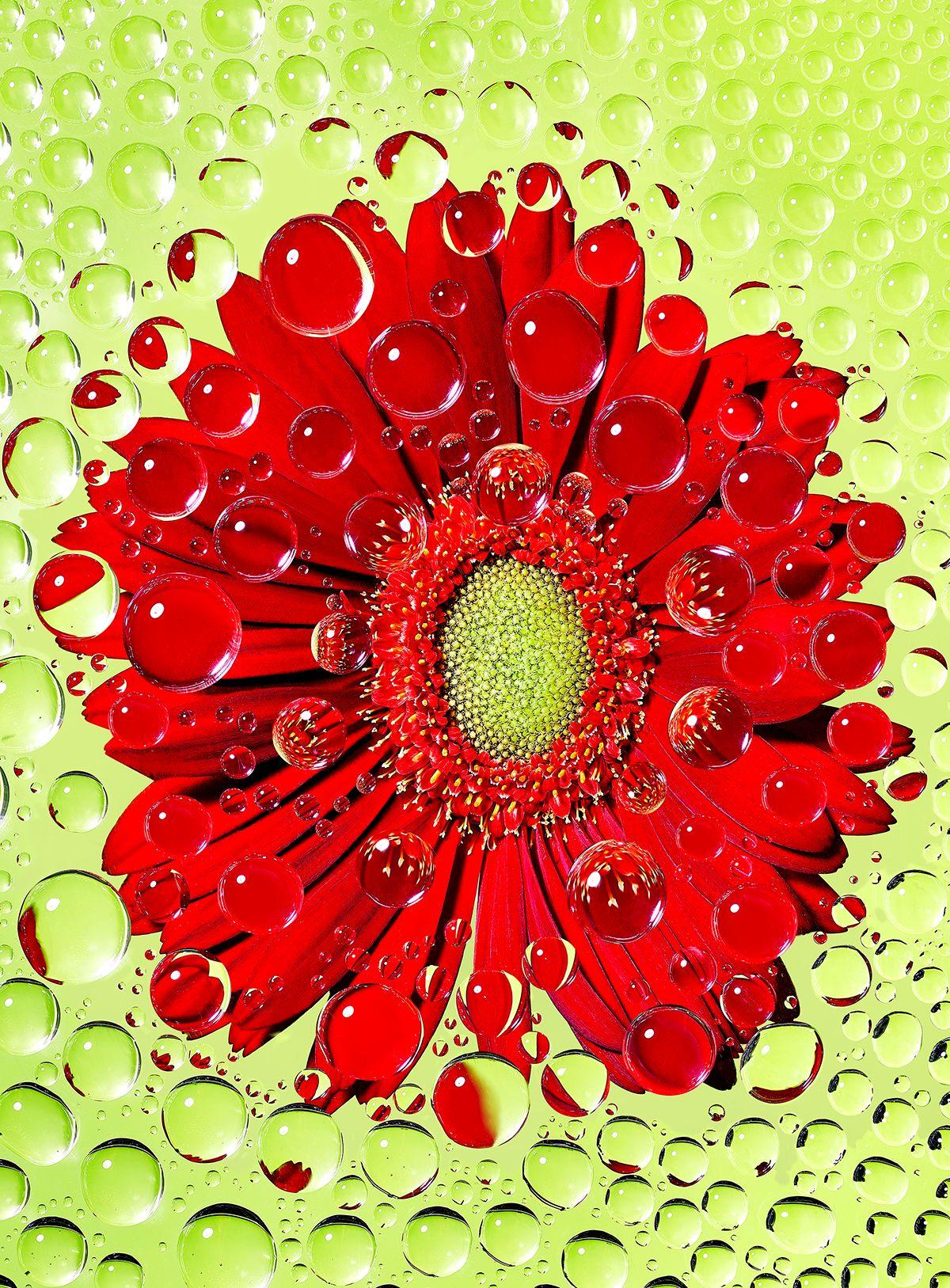 flower_droplets4x6.jpg