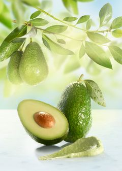 AVOCADO_LEFT_KC_4x6.jpg
