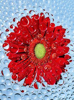 strawberry_flower_droplets_02.jpg