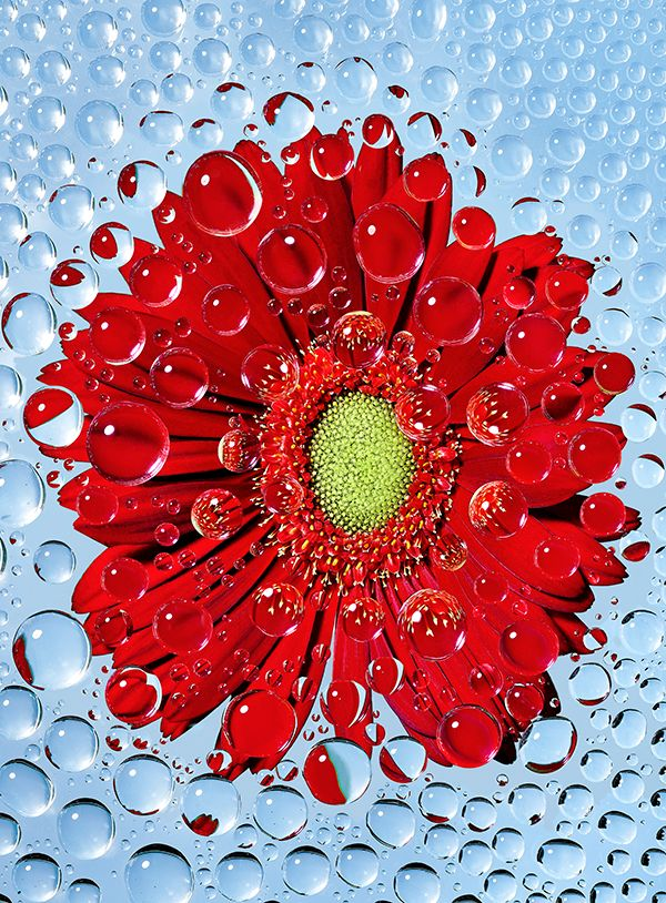 strawberry_flower_droplets_02.jpg