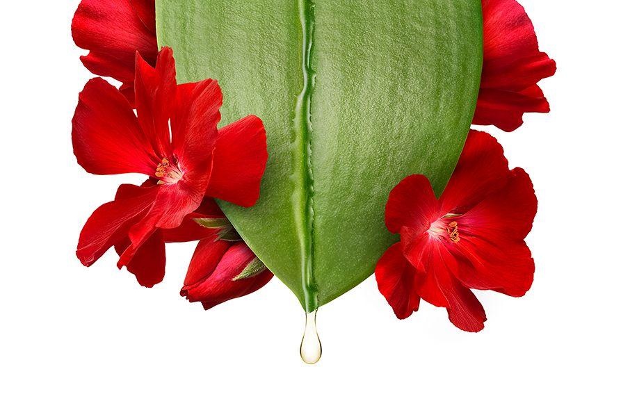 Leaf_Flower_Geranium_01c.jpg