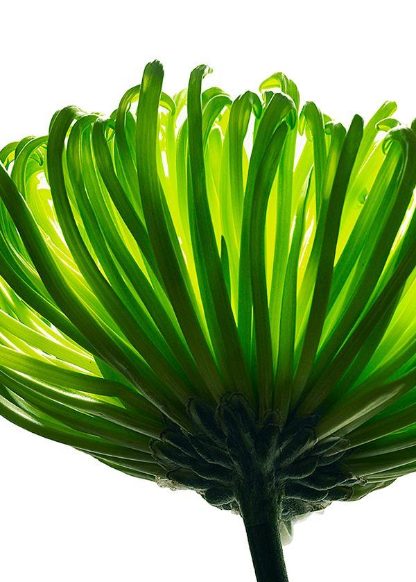 flower_004.jpg