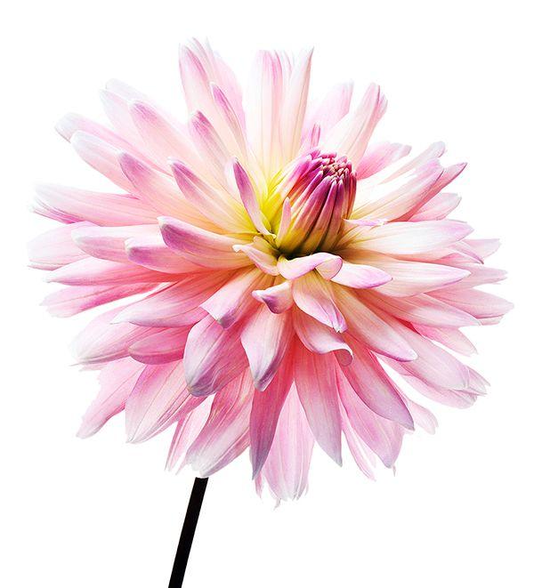 flower_001.jpg