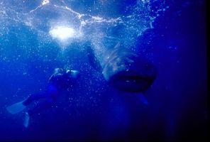 1_0_6_1megamouth_shark_01.jpg