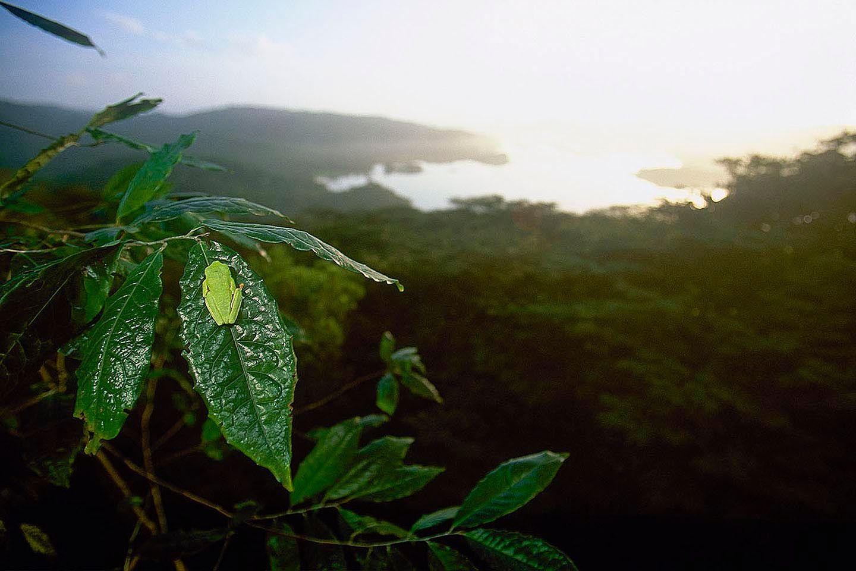 105_1__treefroglandscape