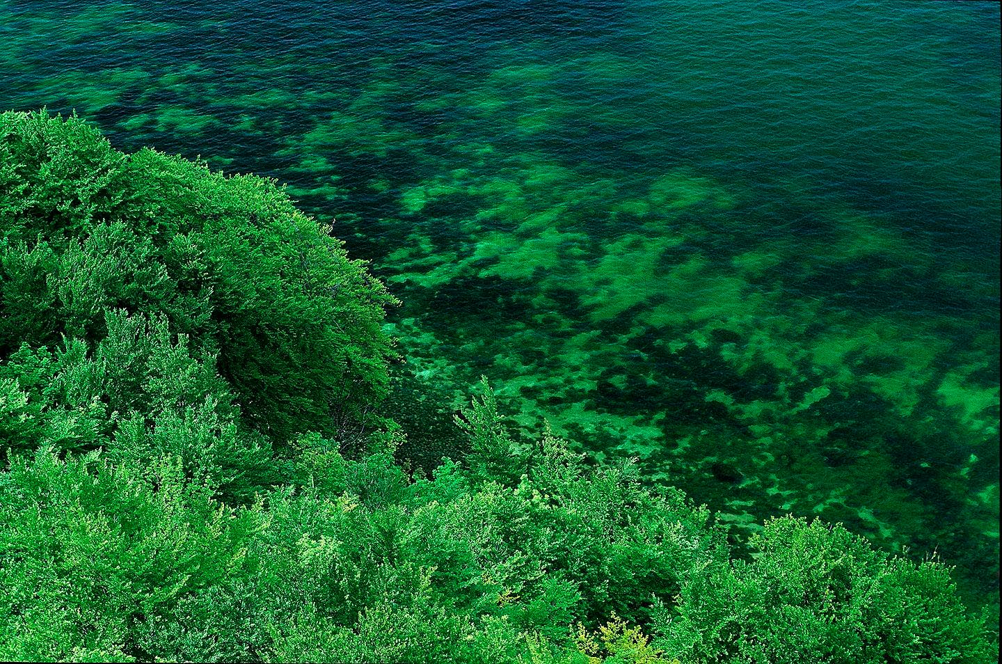 106_green_ocean_and_forest