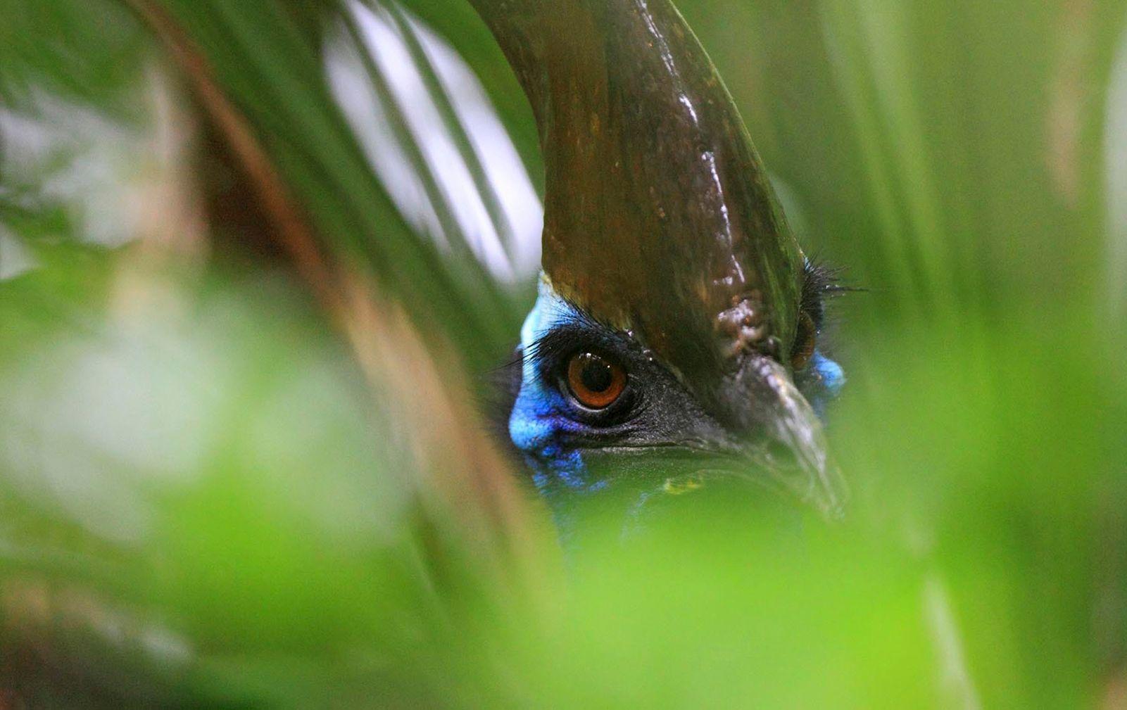 Gardeners of the rainforest