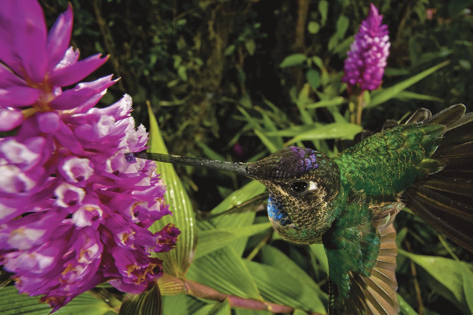 Deceptive beauties - orchids and their pollinators