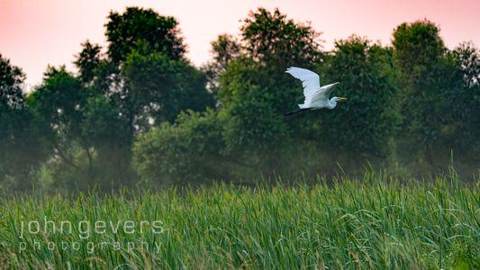 Eagle Marsh 8-8-2021-45