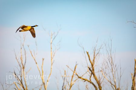 Eagle Marsh 3-27-2021 -297