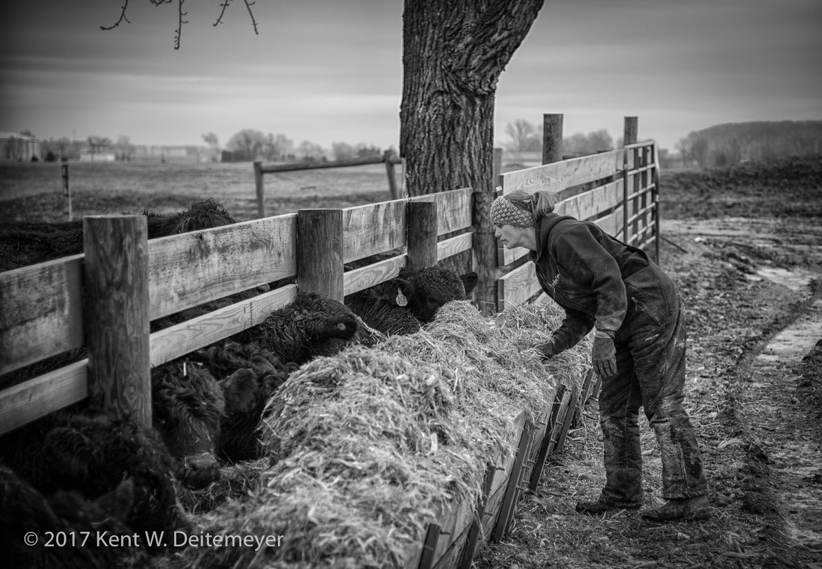 Cathy checking the feed mix in the feeding trough.