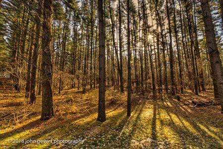 Thoreau Woods 355 • Steuben County, Indiana