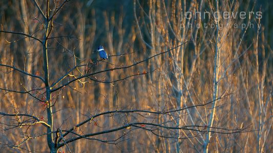 Eagle Marsh-12.3.17-101