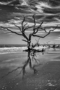Boneyard Beach • Cape Romain 664 • South Carolina