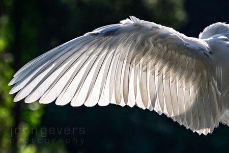 Great Egret • Pinckney Island 195b • South Carolina