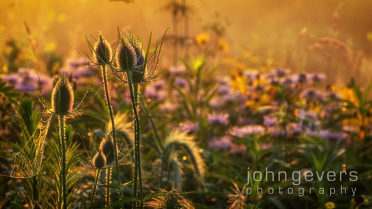 Eagle Marsh Summer Morning 7 • Fort Wayne, Indiana