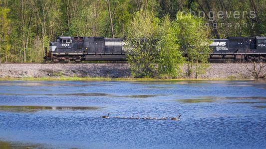 Eagle Marsh 6-5-17-66