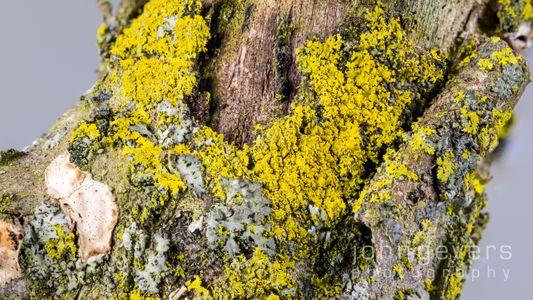 Mossy Branch 1-2