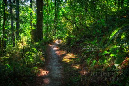 Forest Park-14-Edit.jpg