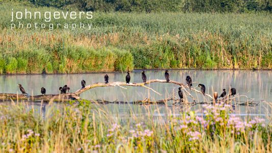 Eagle Marsh 7.25.19-82