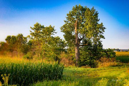 Courtney's Tree • Fort Wayne, Indiana