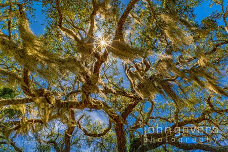 Spanish Moss • Cape Romain 695 • South Carolina