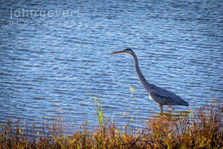 Eagle Marsh 11-11-16-16