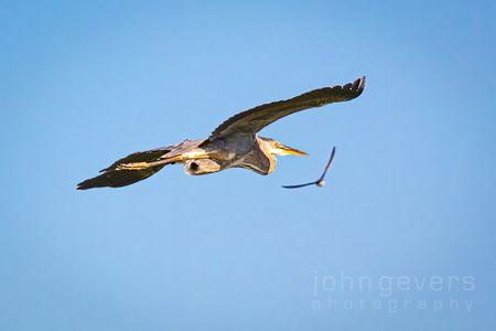 Eagle Marsh 5-30-2020-291