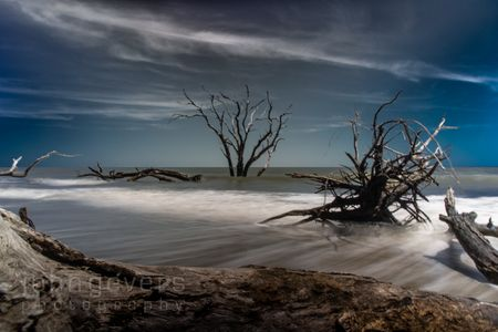 Boneyard Beach • Cape Romain 614 • South Carolina
