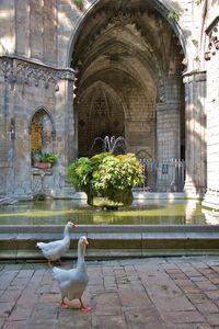 Fountain of Saint George  •  Barcelona, Spain
