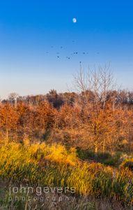 Eagle Marsh 11-11-16-115
