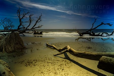 Boneyard Beach • Cape Romain 629 • South Carolina