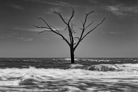 Boneyard Beach • Cape Romain 644 • South Carolina
