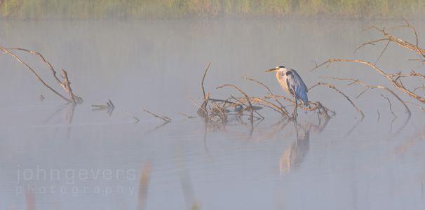 Eagle Marsh 7.25.19-44