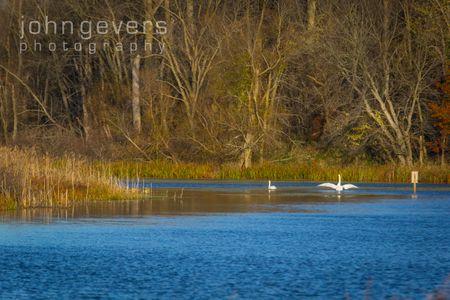 Eagle Marsh 11-11-16-55