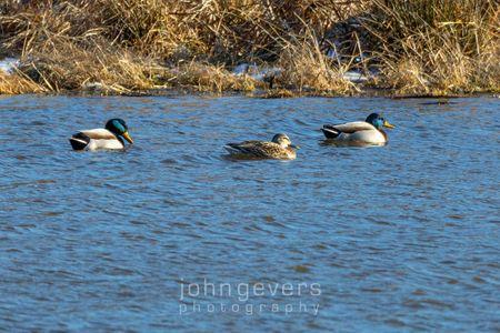 Eagle Marsh 1-1-20-10