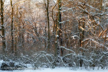 January Woods First Light • Fort Wayne, Indiana