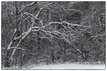 Forest Snow • Fort Wayne, Indiana
