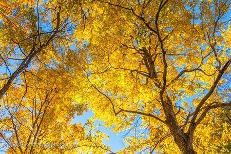 Autumn Drape 2 • Vandolah Acres Preserve • Fort Wayne, Indiana