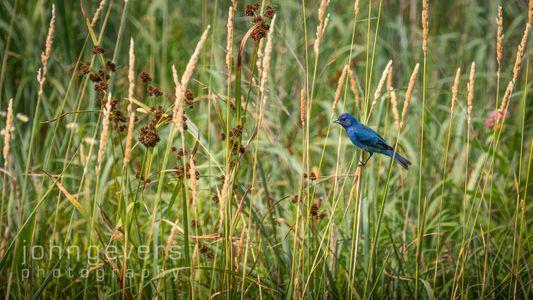 Eagle Marsh 7.7.19-184