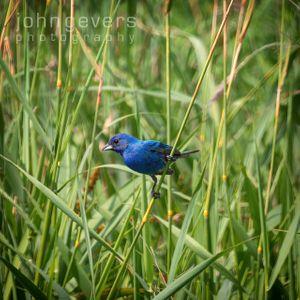 Eagle Marsh 7.7.19-249