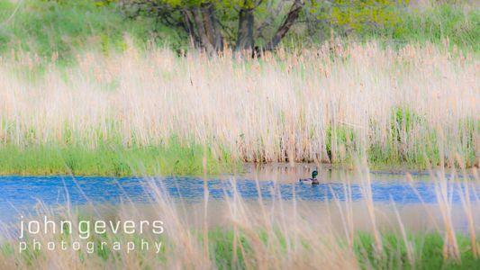 Eagle Marsh 5-3-15-27.jpg