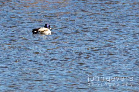 Eagle Marsh 1-1-20-5